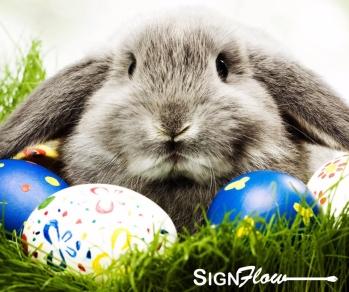bunny D