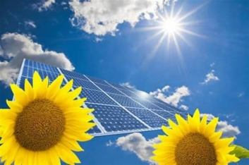 Solar energy sunflowers